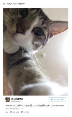 20160724-curazy-cat